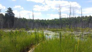Krug Forest