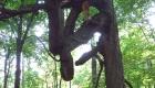 treeform3