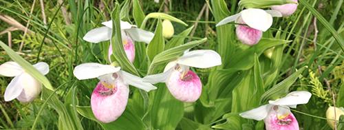 img-whiteredflowers-500px