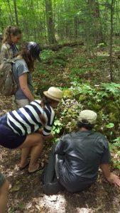 Community Rock - Krug Forest