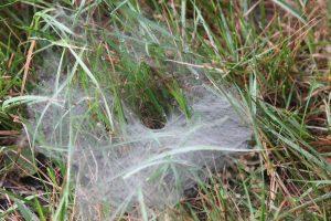 funnel-spider-net