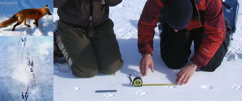 Winter Tracking Class - February 2016
