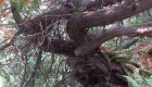 treetrackingcedar