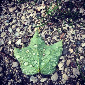 jewelled leaf