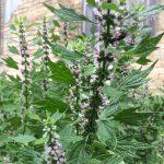 Wild Plants June 27, 2021
